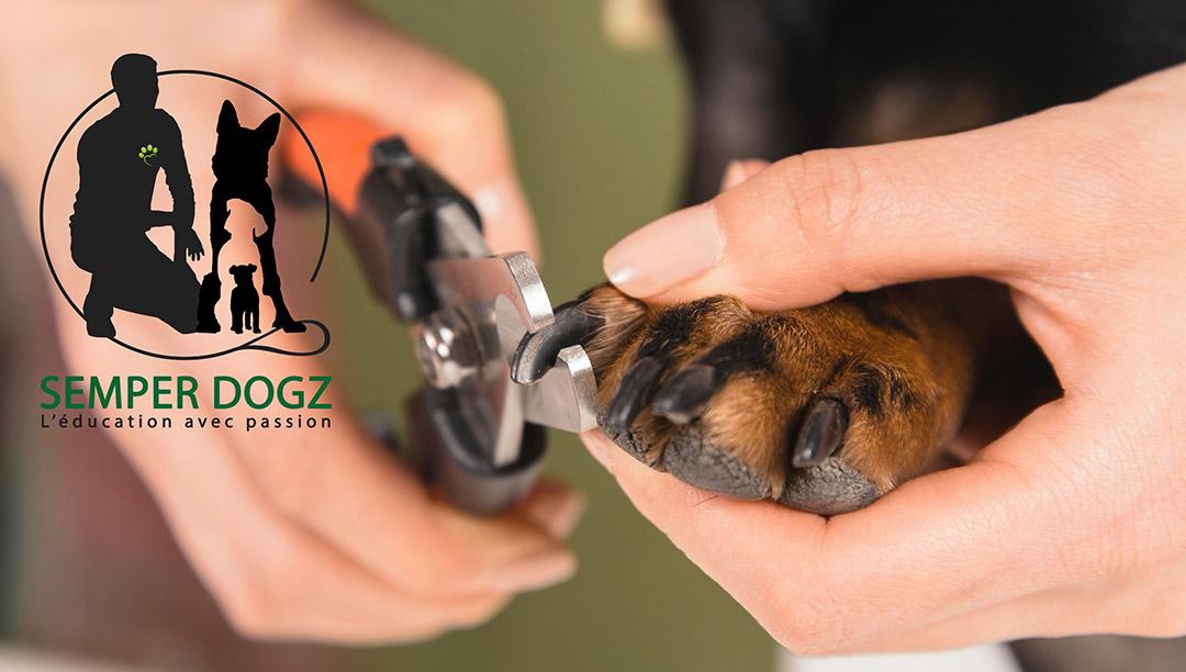 Semper Dogz - éducateur canin nantes cholet - couper les griffes
