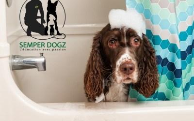 Laver votre chien