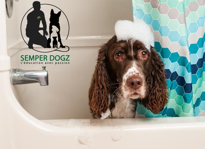 Semper Dogz - éducateur canin nantes cholet - laver le chien