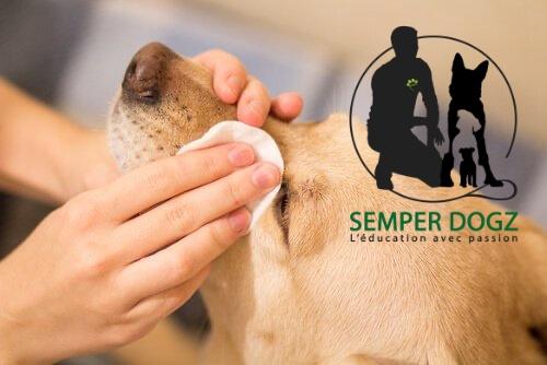 Semper Dogz - éducateur canin nantes cholet - nettoyer les yeux