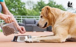 Semper Dogz - éducateur canin nantes cholet - la nourriture industrielle