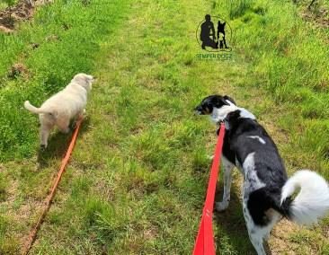 Semper-Dogz---éducateur-canin-nantes-cholet---déconfinement