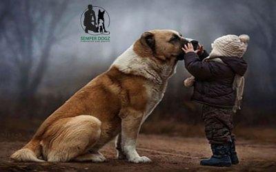 La relation enfant / chien