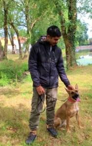 Semper-Dogz---éducateur-canin-nantes-Cholet---malinois-x-boxer-Havana