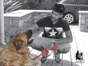 Semper-Dogz-educateur-canin-nantes-cholet-le-chien-communique-avec-lâme