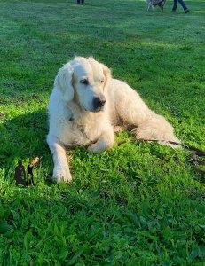 Semper-Dogz-éducateur-canin-nantes-cholet-balade-éducative-Ibaya