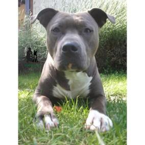 Semper-Dogz-educateur-canin-nantes-cholet-la-confiance-dans-le-regard