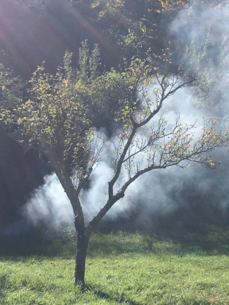 albero con colori autunnali
