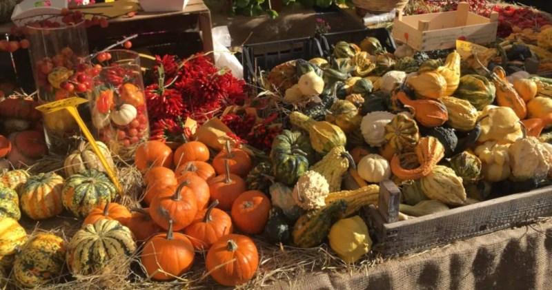 zucche ornamentali colorate in autunno