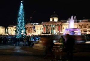 L'albero di natale a Trafalgar Square a Londra 2019