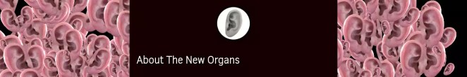 Projeto New Organs