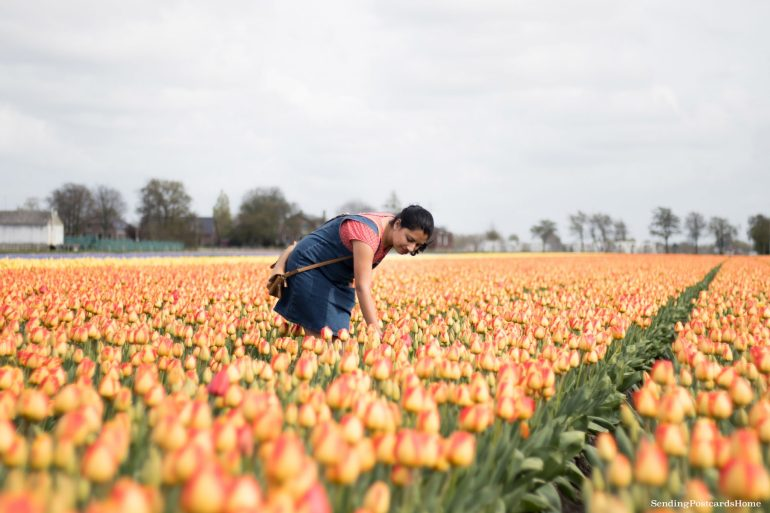 Exploring the tulip fields in Amsterdam, Netherland 12