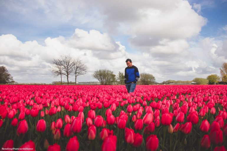 Exploring the tulip fields in Amsterdam, Netherland 2