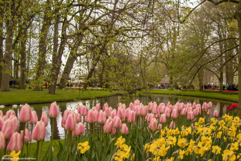 keukenhof, Exploring the tulip fields in Amsterdam, Netherland 8