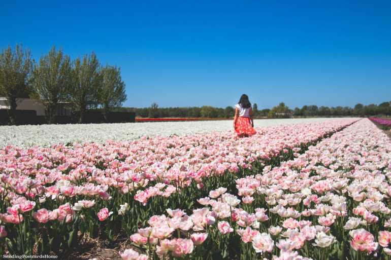 Keukenhof_ Amsterdam Guide for the First Timers