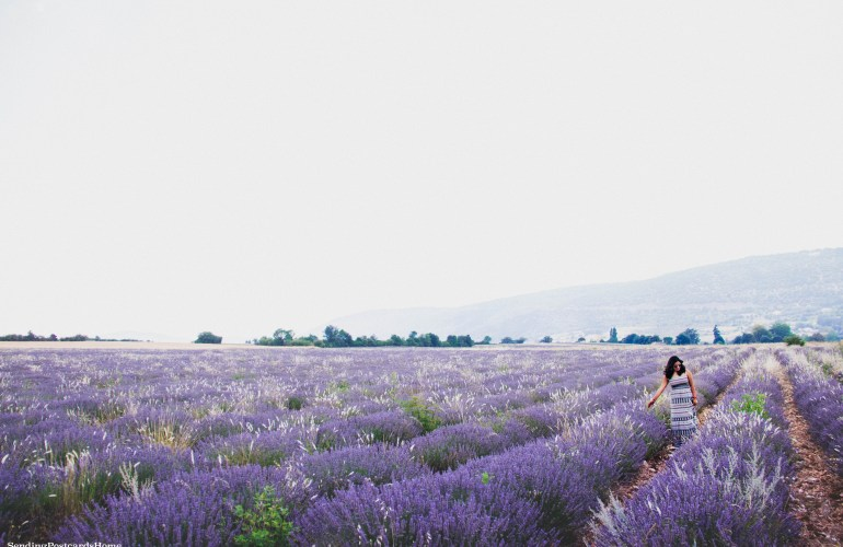 Provence and it's majestic Lavender fields