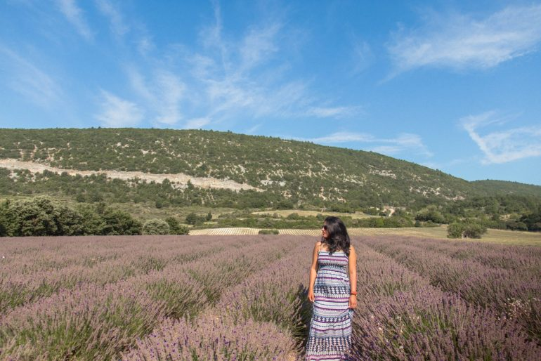 Lavender fields in early August, Provence and it's majestic Lavender fields