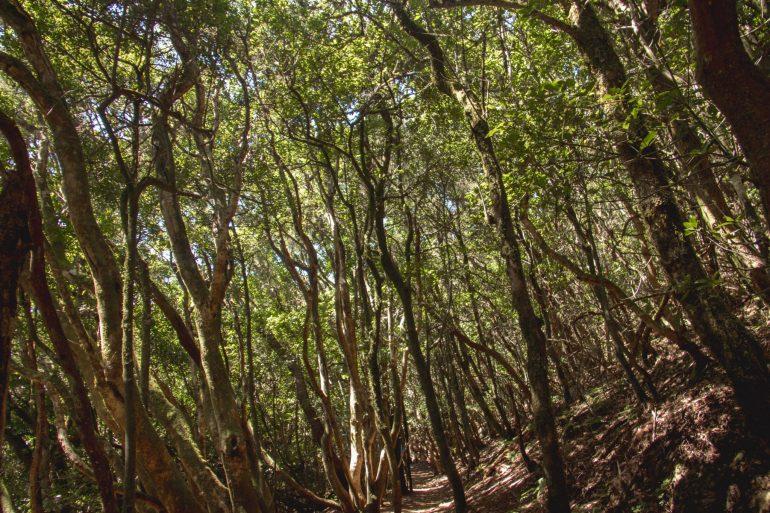 Parque Rural de Anaga Tenerife 4