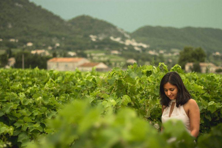 Sablet - Vineyards, Provence 2