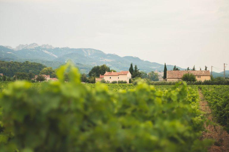 Sablet - Vineyards, Provence 3