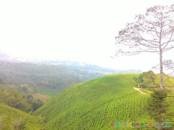 Kebun Teh Kemuning Karanganyar Jawa Tengah