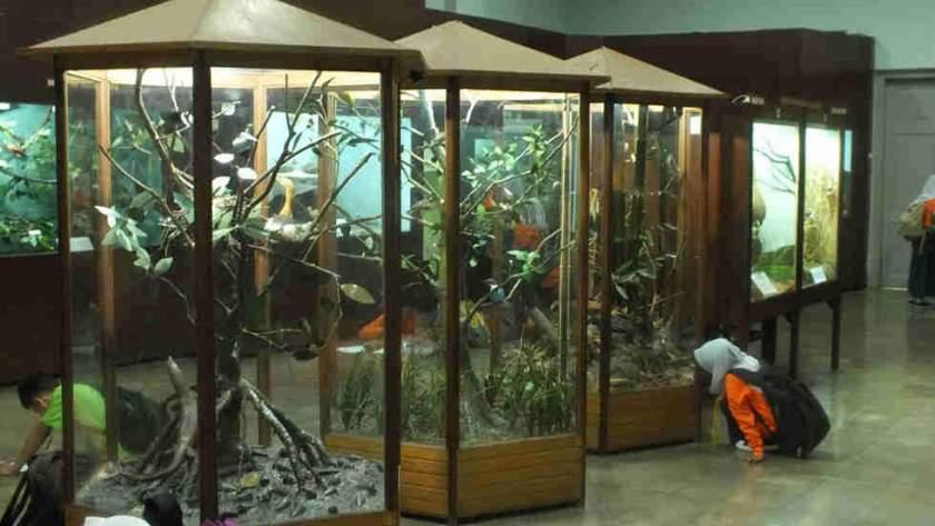 Museum Zoologi - Kebun Raya Bogor