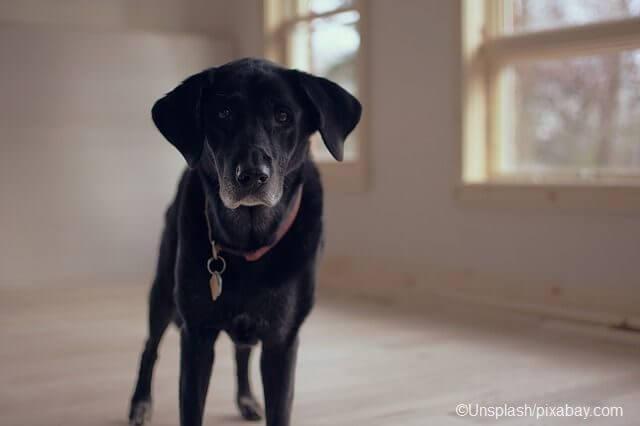 9 Anzeichen, dass Ihr Hund Schmerzen hat
