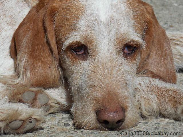 Krebs beim Hund - 12 Symptome auf die Sie achten sollten