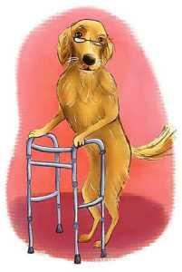 10 Senior dog care tips