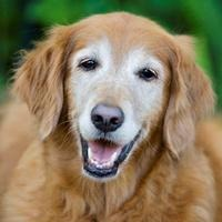 old-dog-smiling
