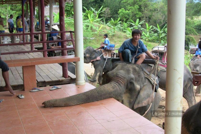 sesja zdjęciowa ze słoniami w Tajlandii