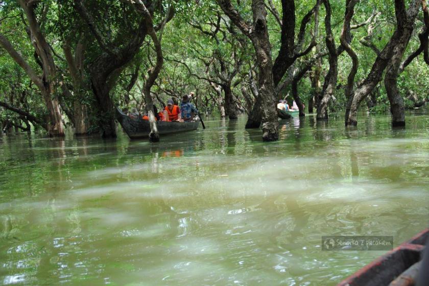 Pływamy między koronami drzew w Kambodży