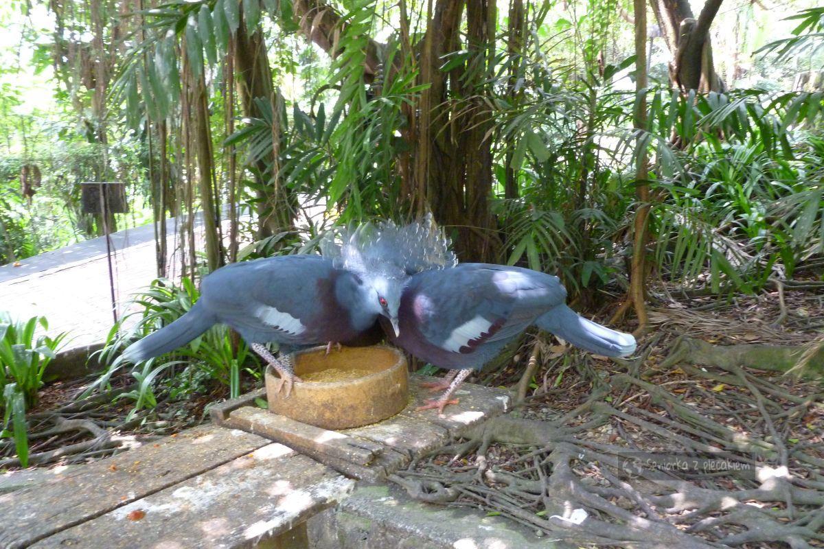 Kuala Lumpur - Park Ptaków i Jaskinie Batu