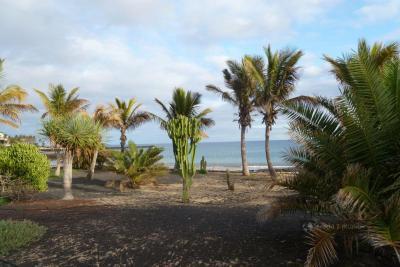 Palmy na Lanzarote