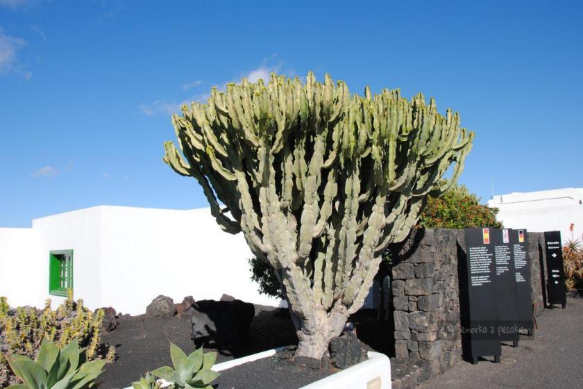 Ogród Cesara Manrique na Lanzarote