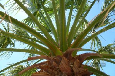 Palma na Santorini