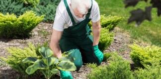senior gardening