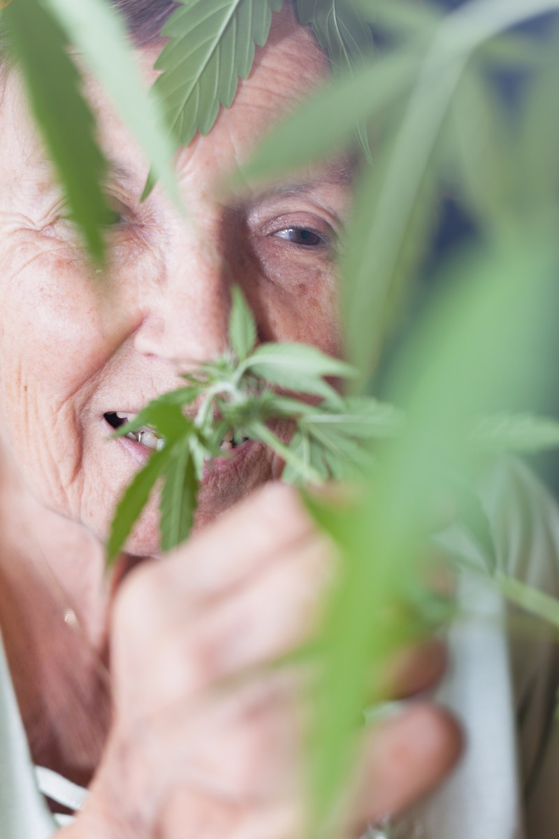 Can Marijuana Help with Senior Pain?