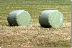 baled hay cylinders 8-1-2015 6-03-20 AM 2007x1339