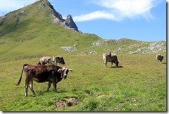 cows and scenery-001