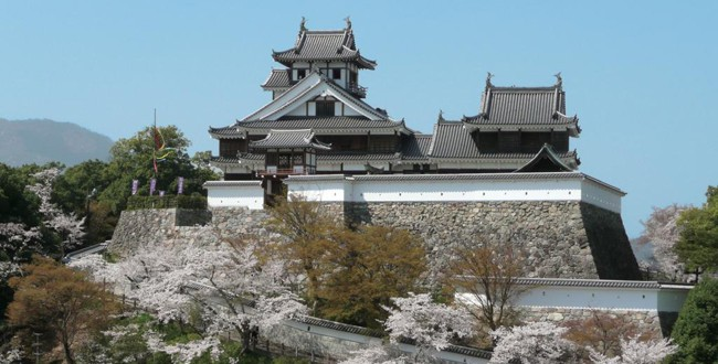 桜と福知山城