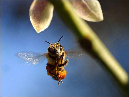 Bester Dokumentarfilm? 'More than Honey' von Markus Imhoof