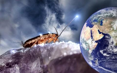 Тараканы-захватчики и их «нашествие»