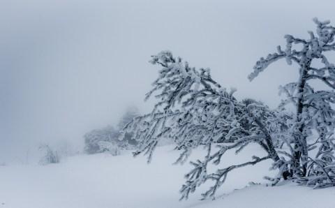В Красноярский край придут 55-градусные морозы