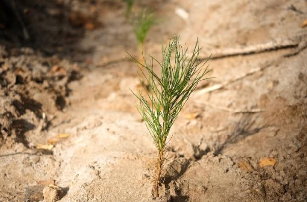 В Кировской области в этом году восстановят38 тысяч гектаров леса