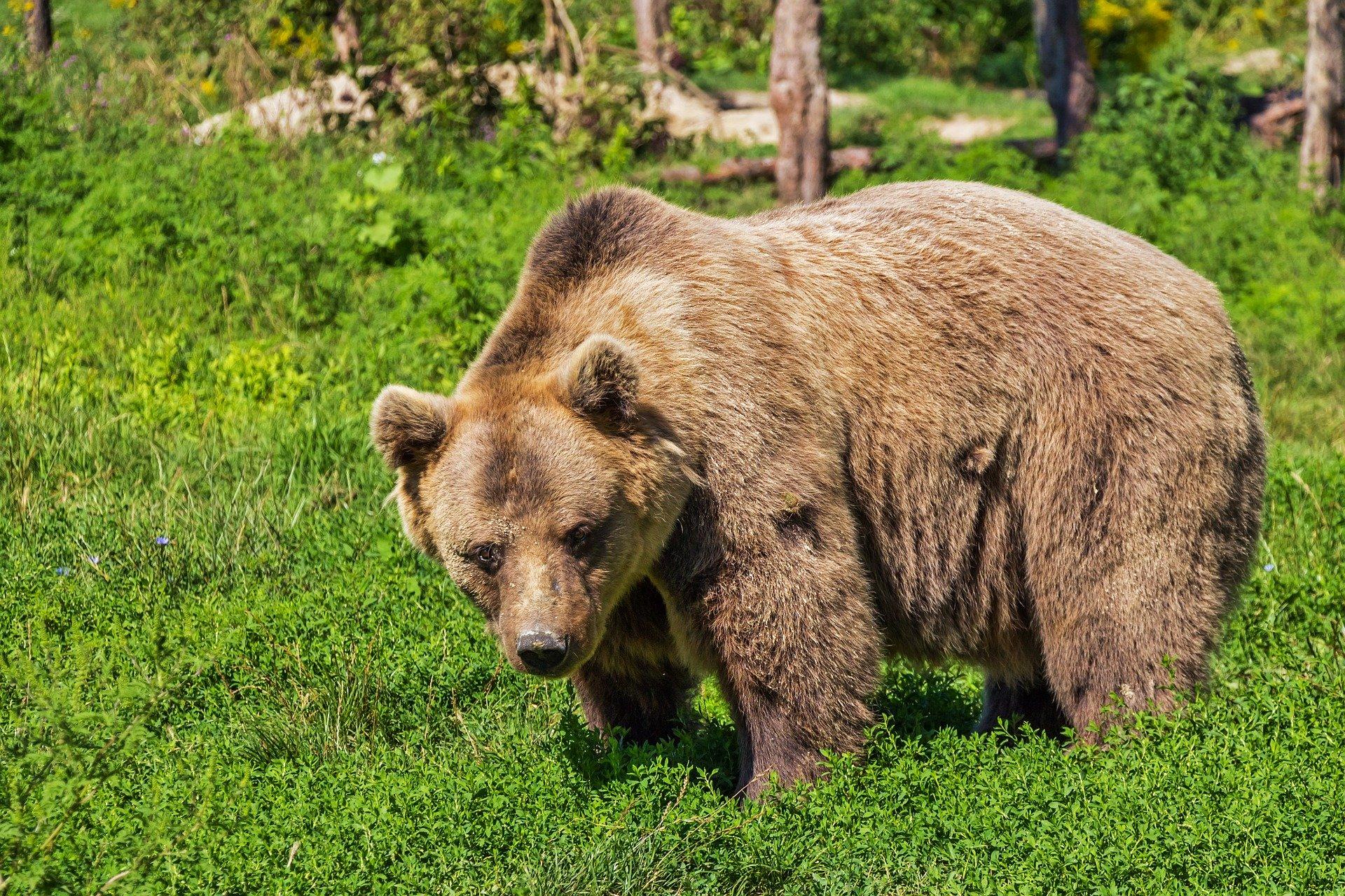 В Красноярском природном парке «Ергаки» ликвидируют медведей