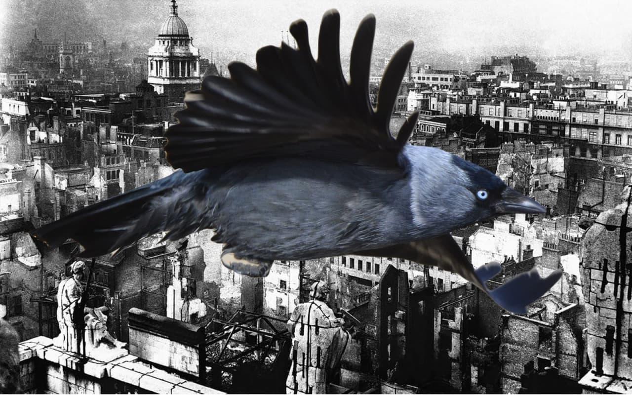 Кое-что о бытовой орнитологии или почему не стоит ей заниматься