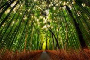 思考像竹子的腹型人