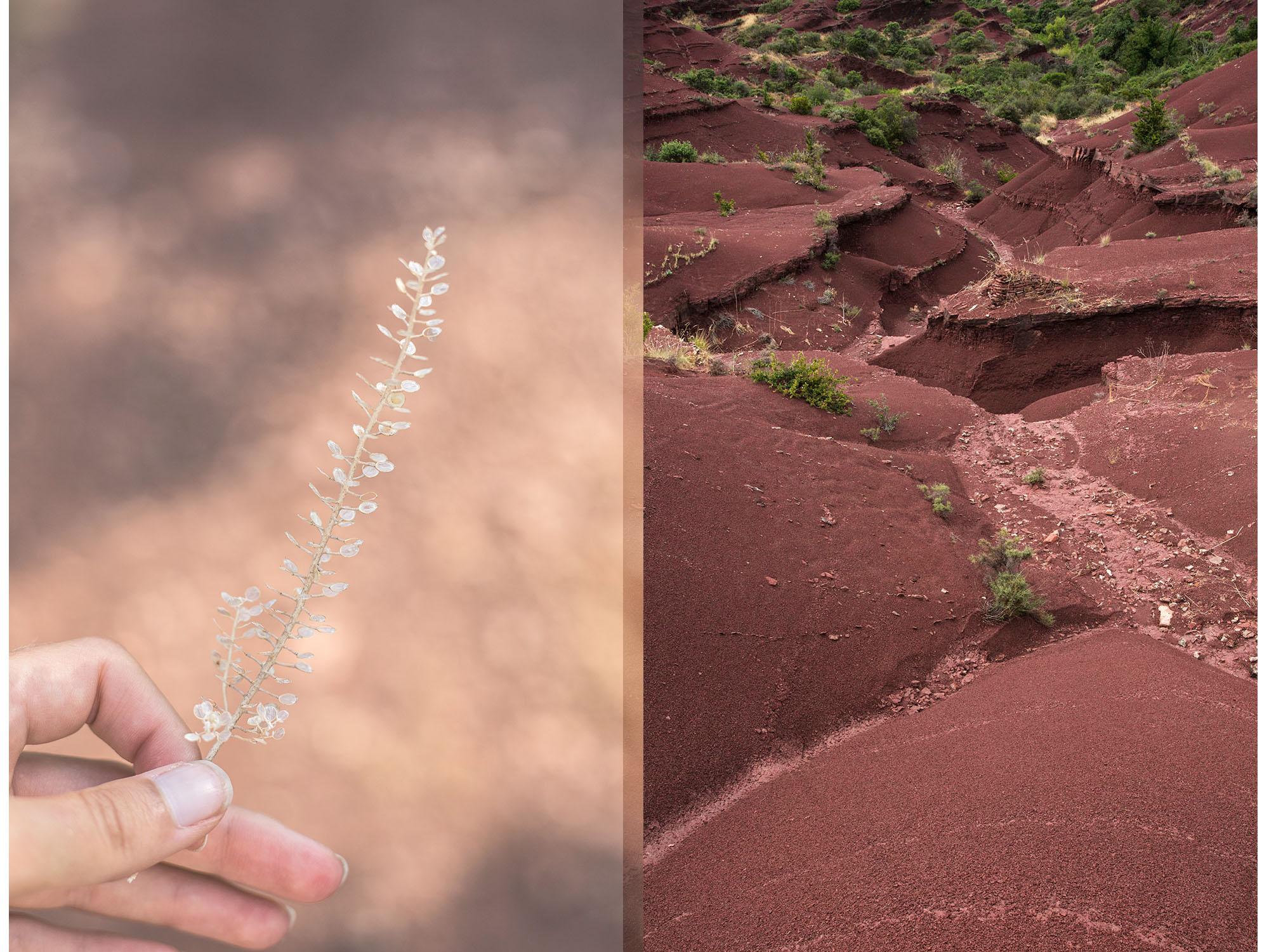 flore lac salagou