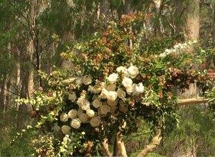 chuppa flowers